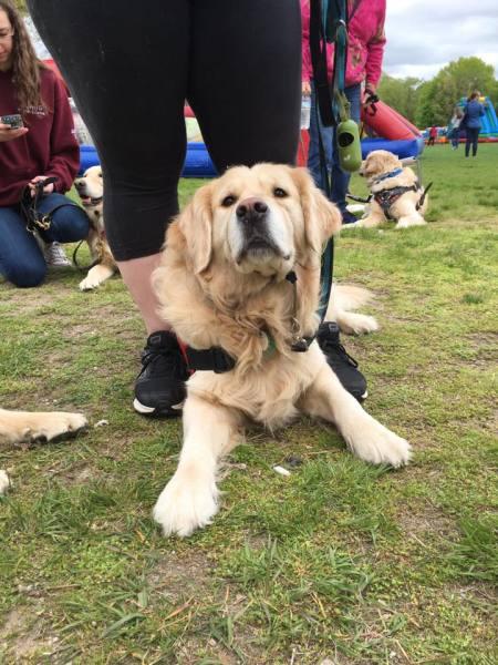PTSD dog, Boston Marathon Bombing
