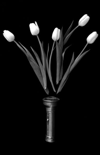 Flashlight and Tulips