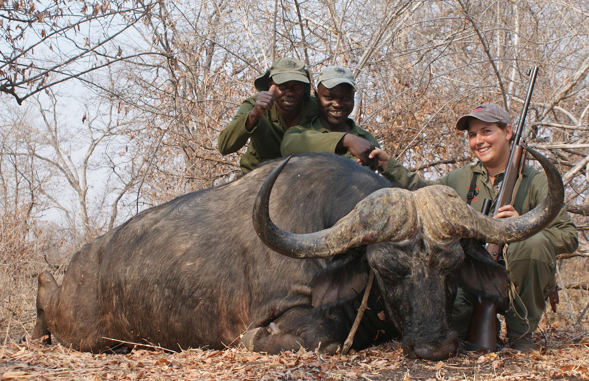 41 inch Buffalo