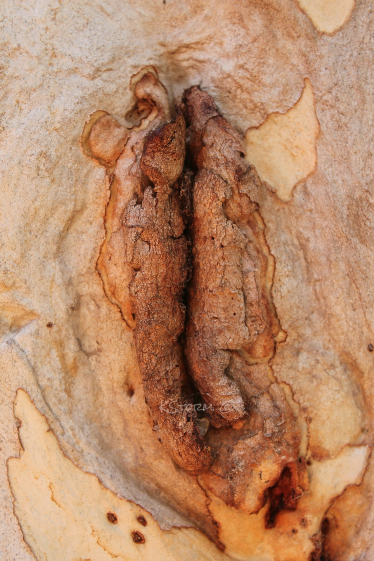 Natures Vagina