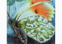 Outdoors - colored pencil drawing of an orange tip by Michaela Seidl