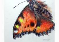 Outdoors - colored pencil drawing of a small tortoiseshell by Michaela Seidl
