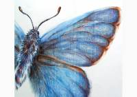 Outdoors - colored pencil drawing of a common blue by Michaela Seidl