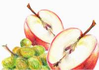 Still life - colored pencil drawing of apples and grapes by Michaela Seidl