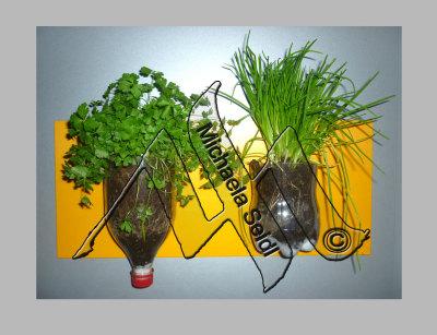 Indoor herb garden, parsley, chives
