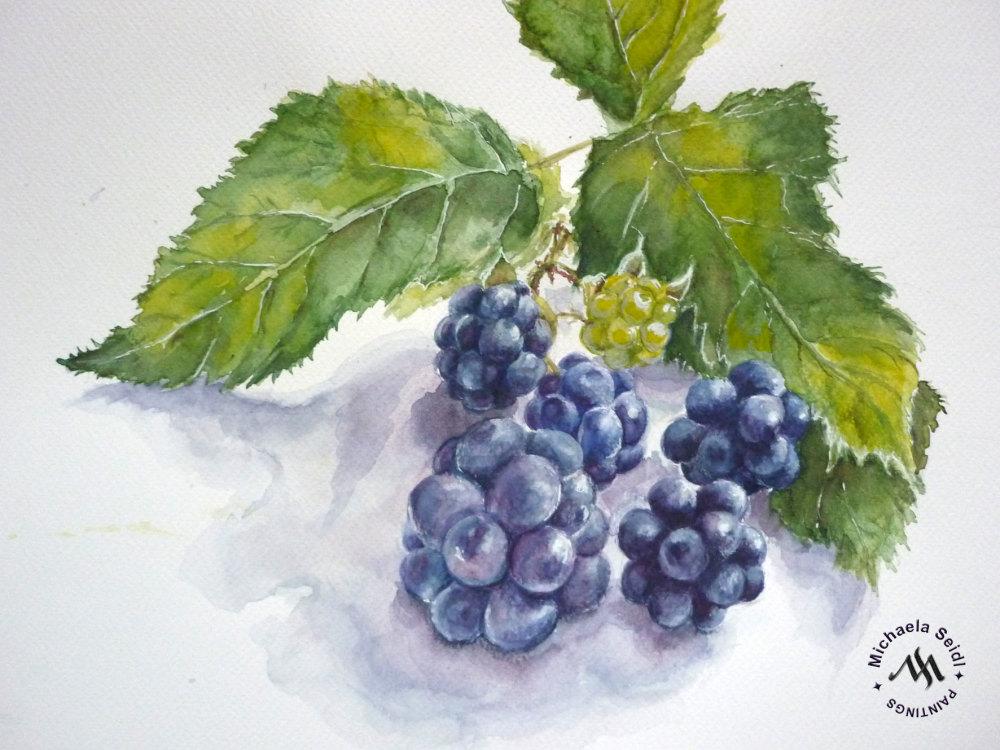 Watercolor painting of blackberries by Michaela Seidl