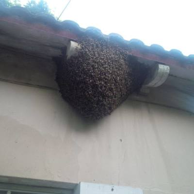 Natural Bee Swarm Removal