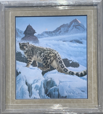 Snow Leopard Sample 561/1500