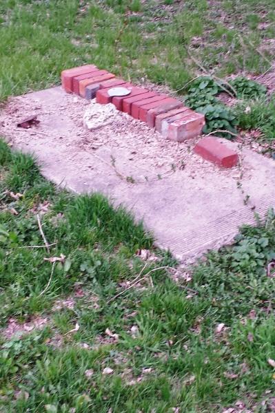 found bricks under a tree