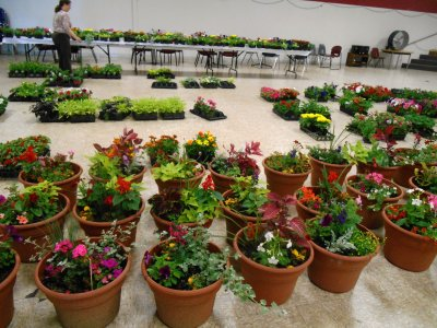 PJ Garden Club to host plant sale Friday