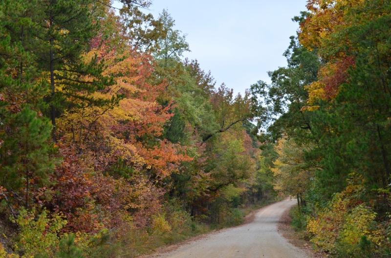 Forest use surveys underway