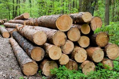 Hutchinson discusses Arkansas timber industry