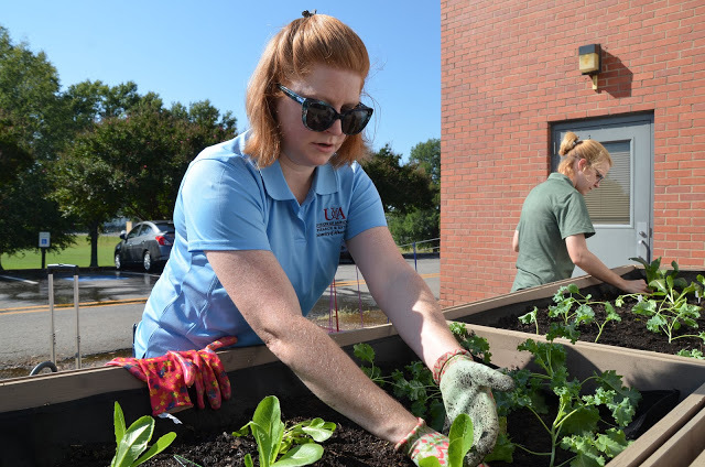 UACCM gardens support campus food pantry