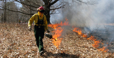 Prescribed burns scheduled for area national forests