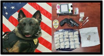 Drug dog helps make arrest