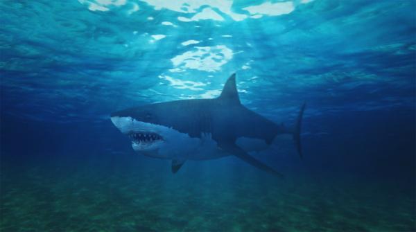 Shark · Final Shot