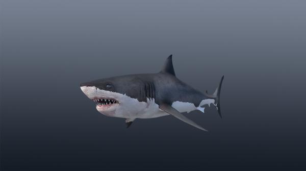 Shark · 3D