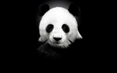 Healing Panda NYC