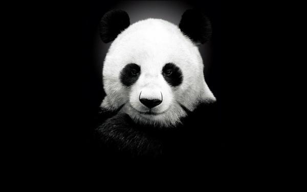 The Healing Panda