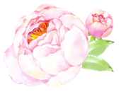 Peonies on the Port - Virtual Assistant for Creative Professionals
