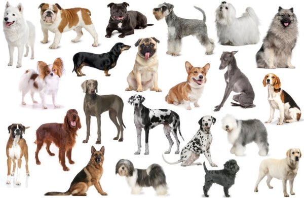 What's your favourite breed
