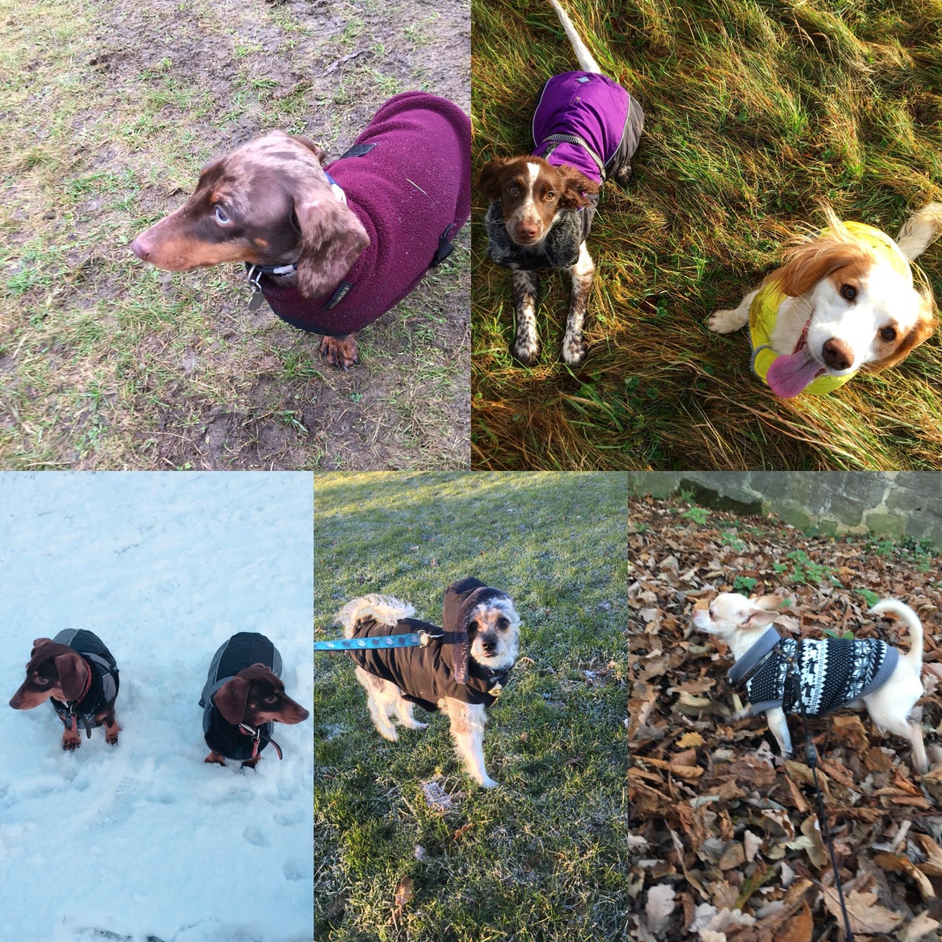Canine Coats
