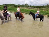 Paint horse, riding, trail riding, lessons, rescue, pony rides, horse boarding, Bonham TX, equine facility, quarter horse, cow ponies, grass pastures, pasture board, happy cows, grass fed beef, wildlife, trails, wild life, wild flowers, butterflies, honey bees, bumble bees, organic products