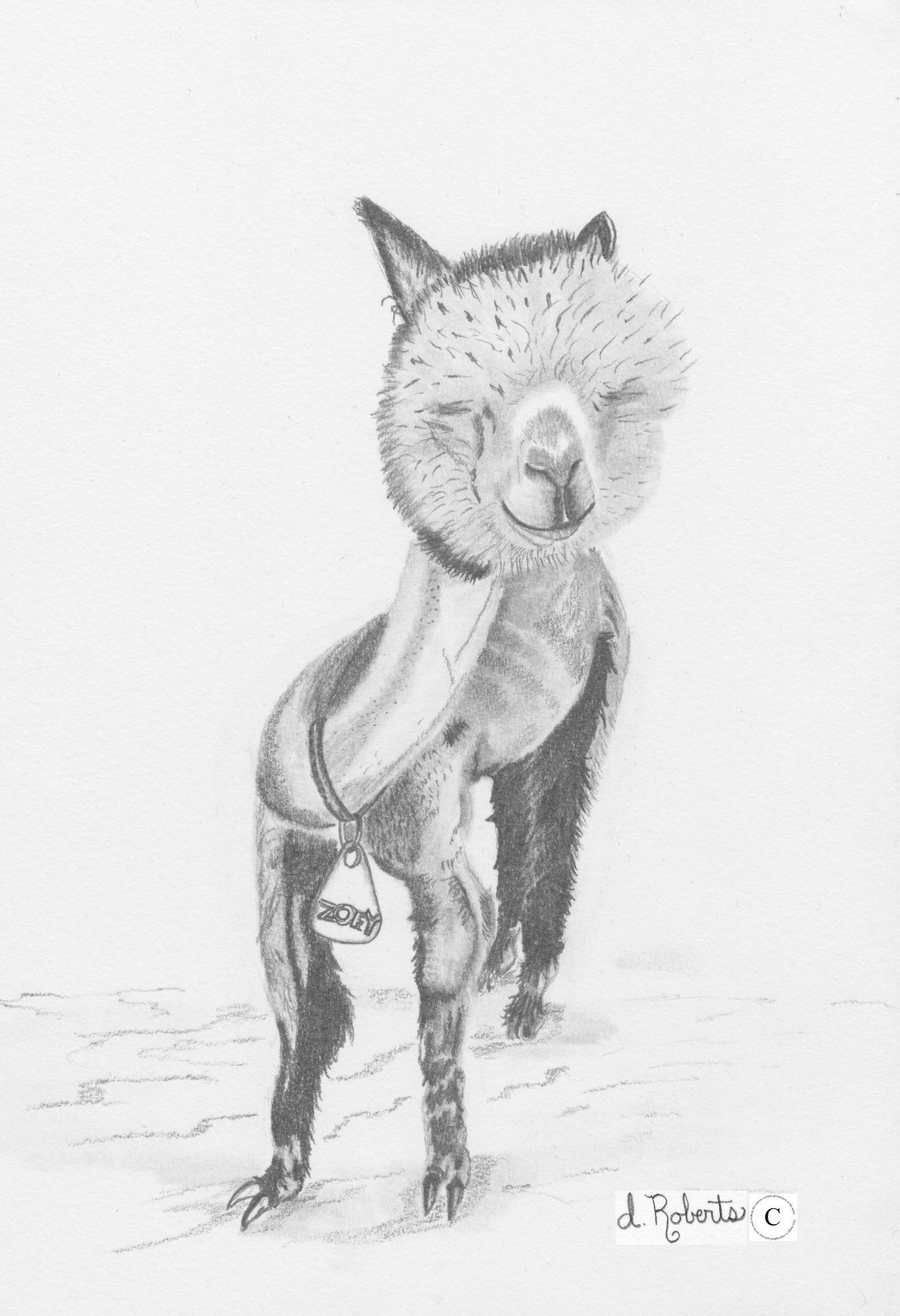 Alpaca 8