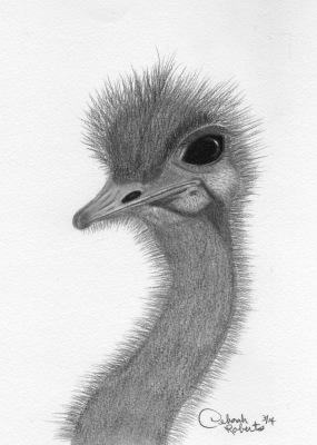 Ostrich Long Neck