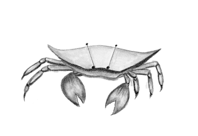 Crabby-printed with white background