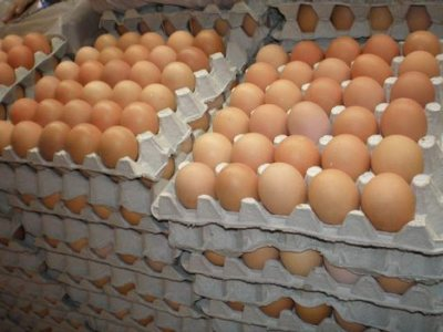 Eggs & Eggs Products