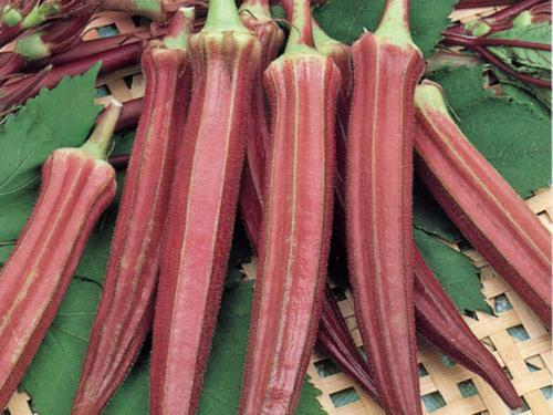 RED BURGUNDY OKRA - ORGANIC