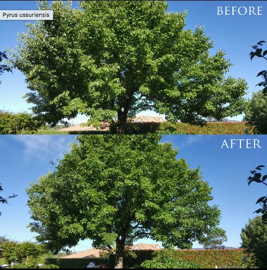 Canberra Tree Arborist