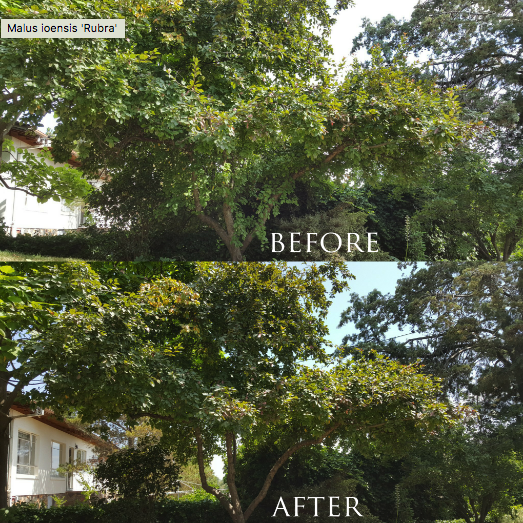Canberra Tree Removal