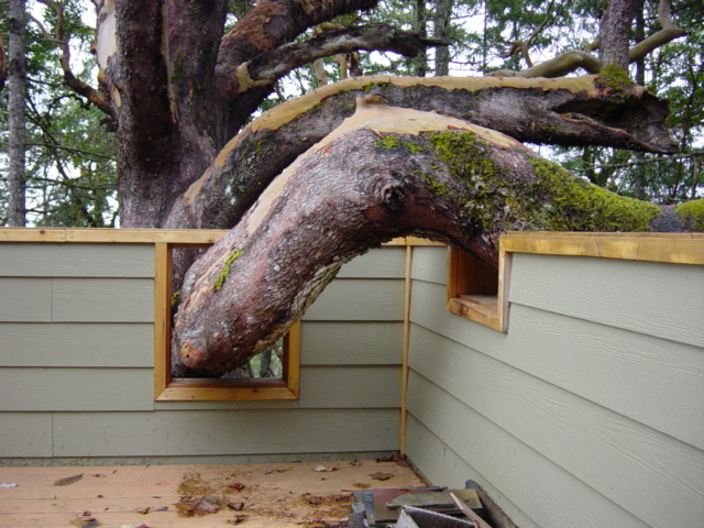 Tree through deck