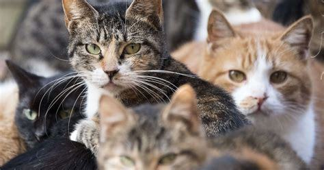 Feral and Stray  Cats: What's the Difference?