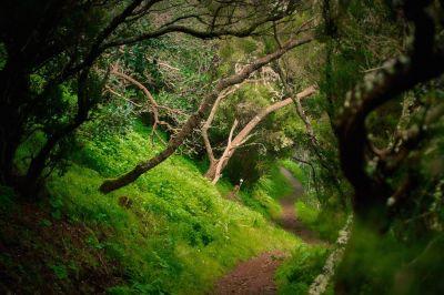 Hiking Anaga Forest