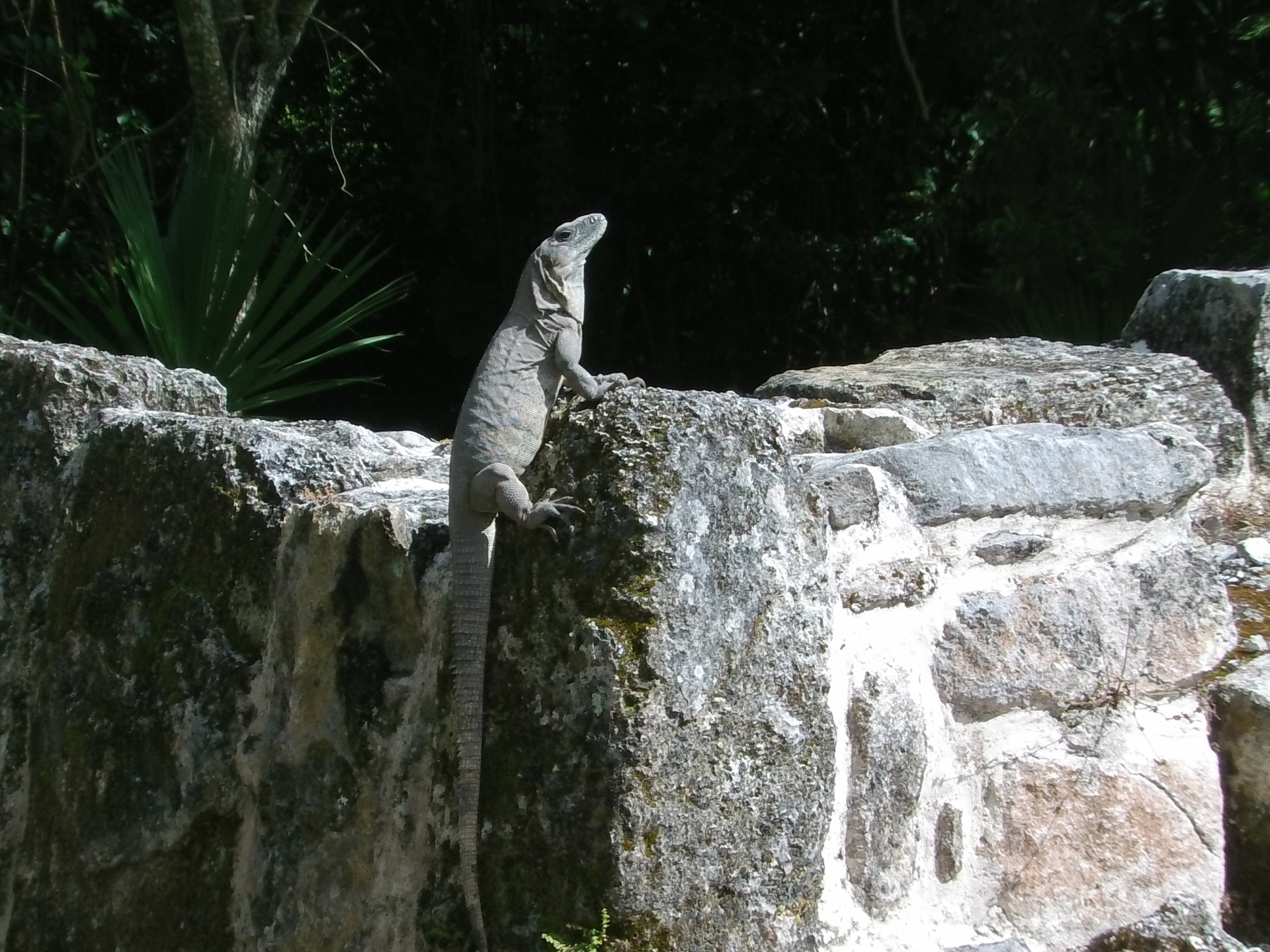 San Gervasio Visitor