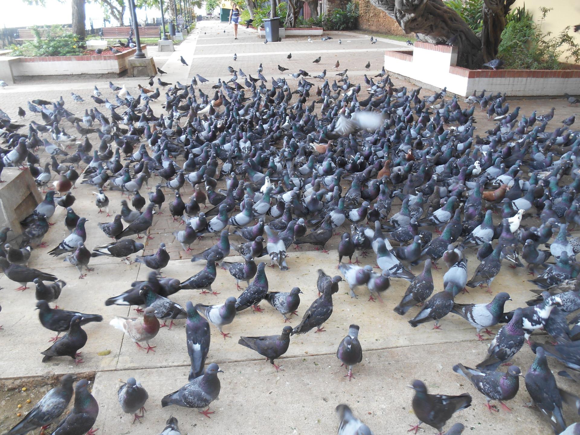 pigeon park san juan