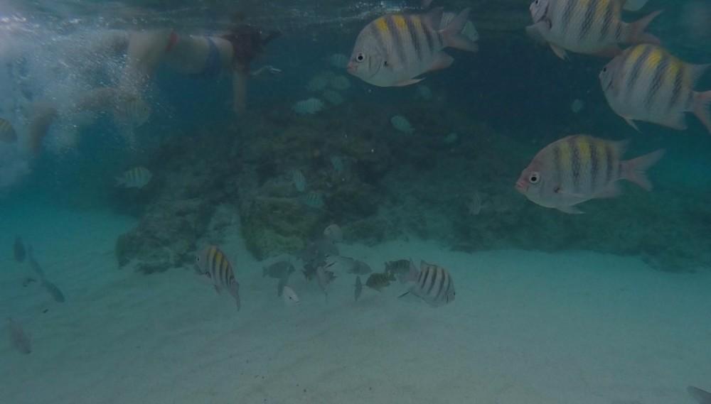 Underwater camera Coki Beach