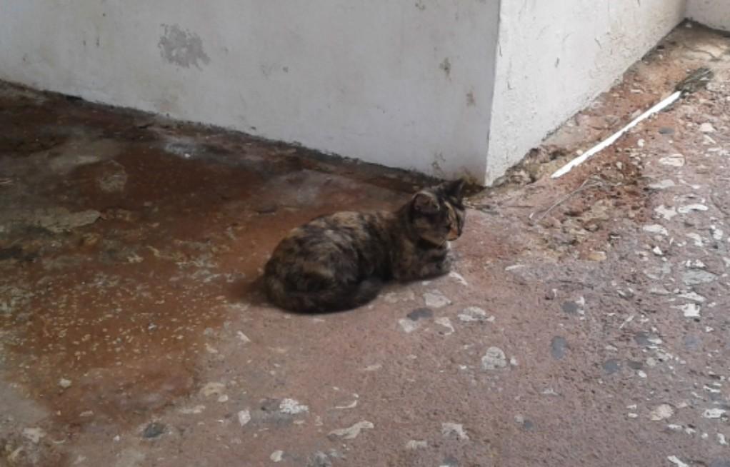 Cats of Old San Juan