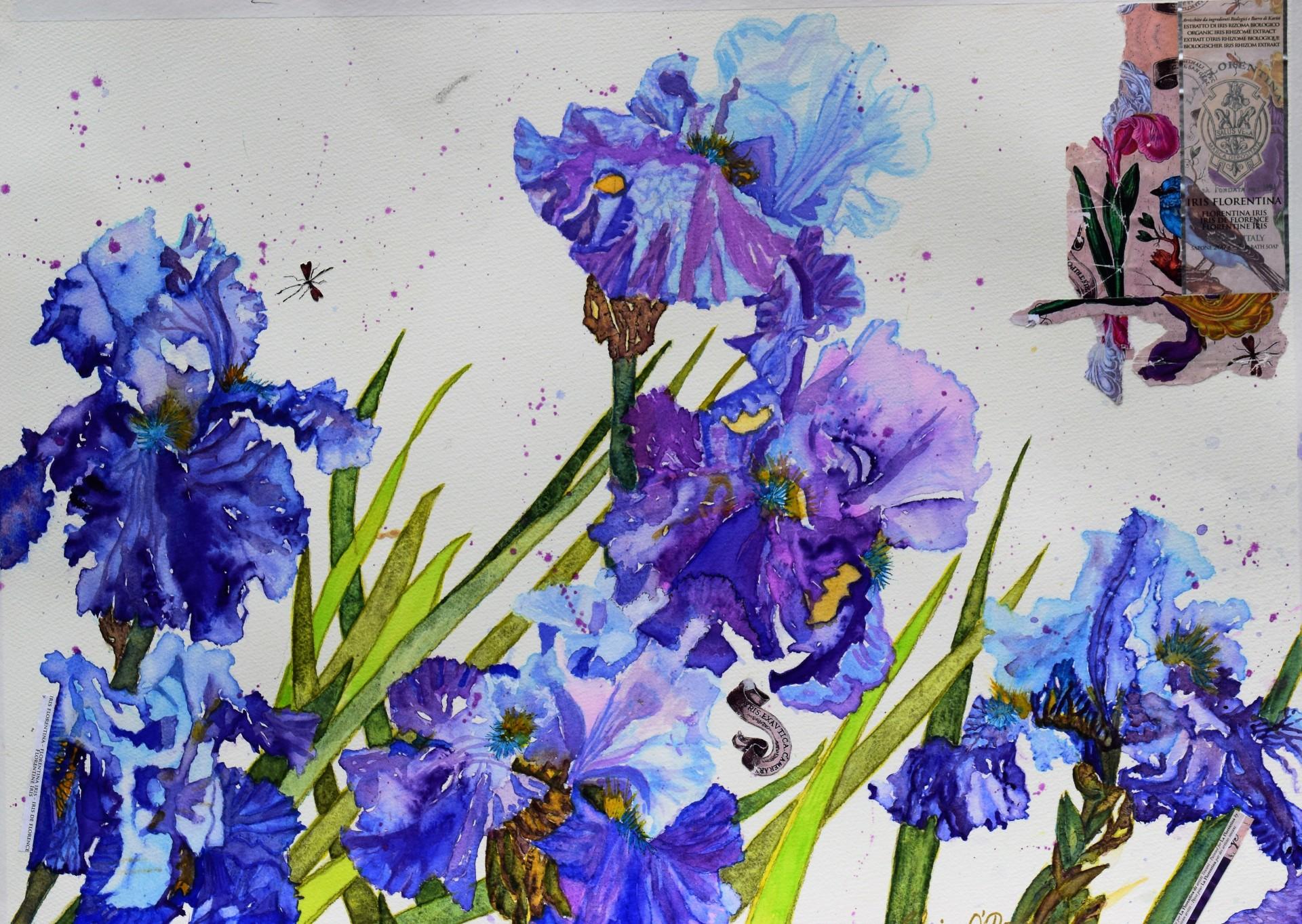 Iris Florentina. NFS ( 10 giclee prints available soon £95.00 each)