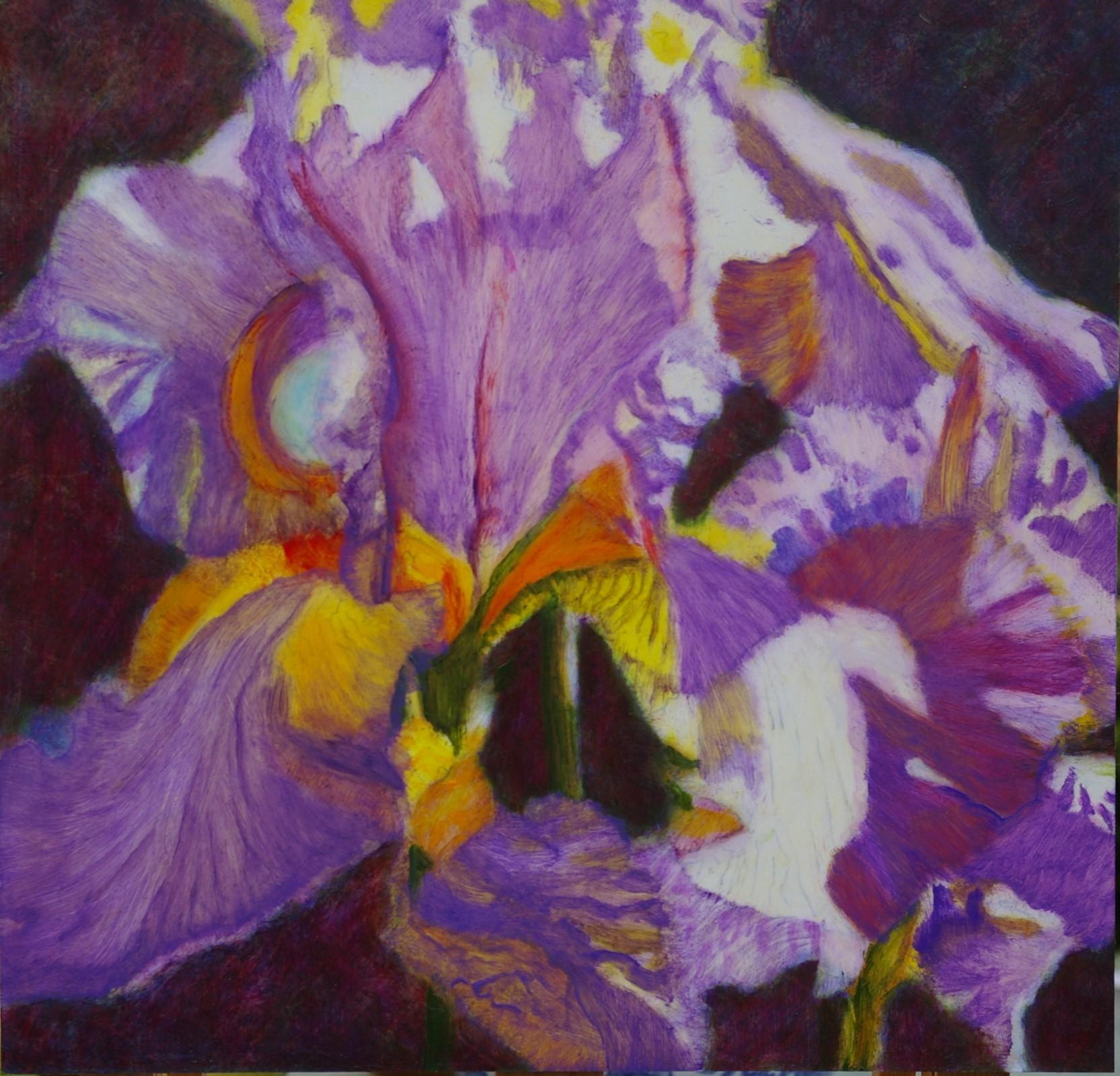 Purple iris. £95.00