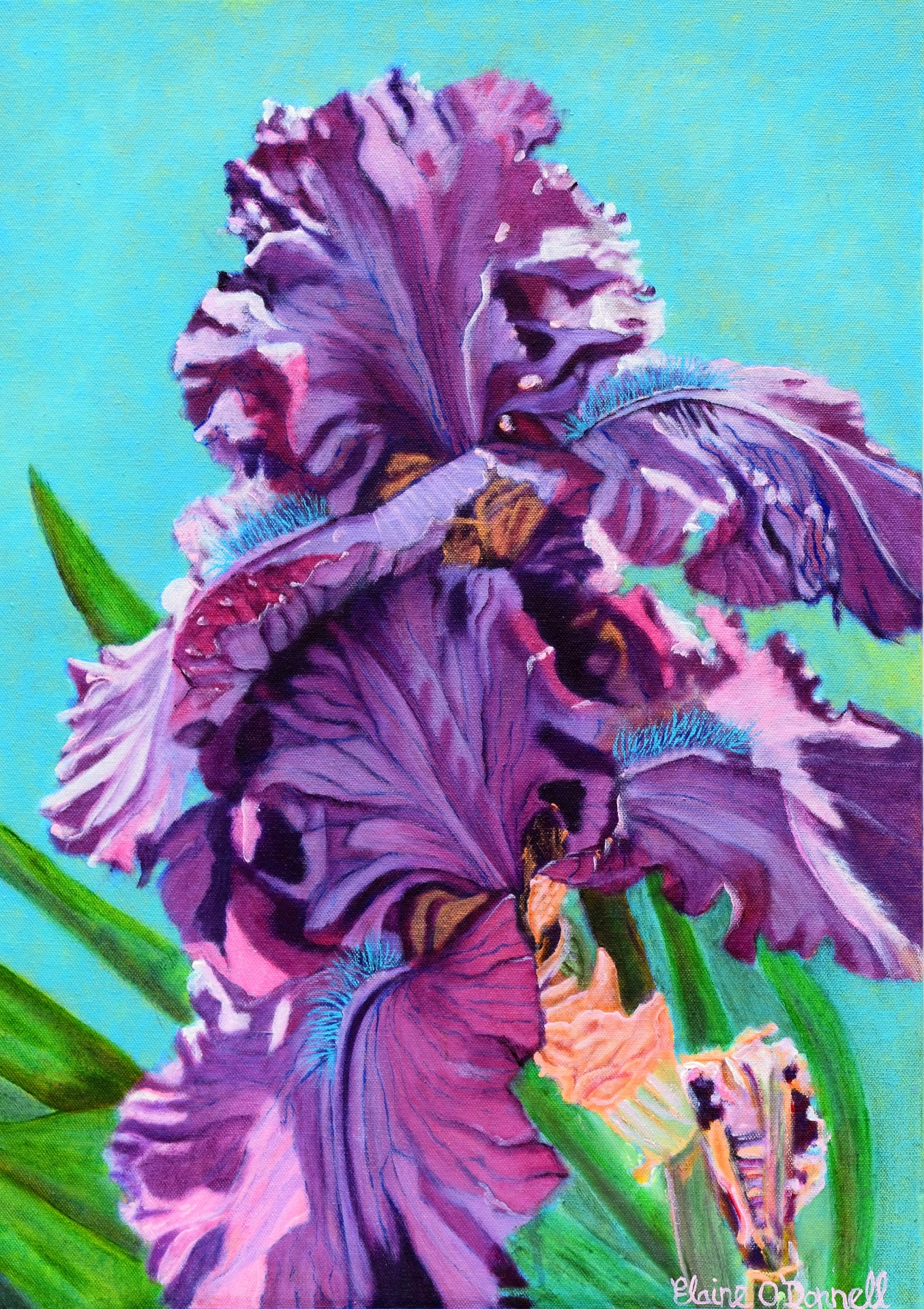 Purple Iris - Florence. £350.00