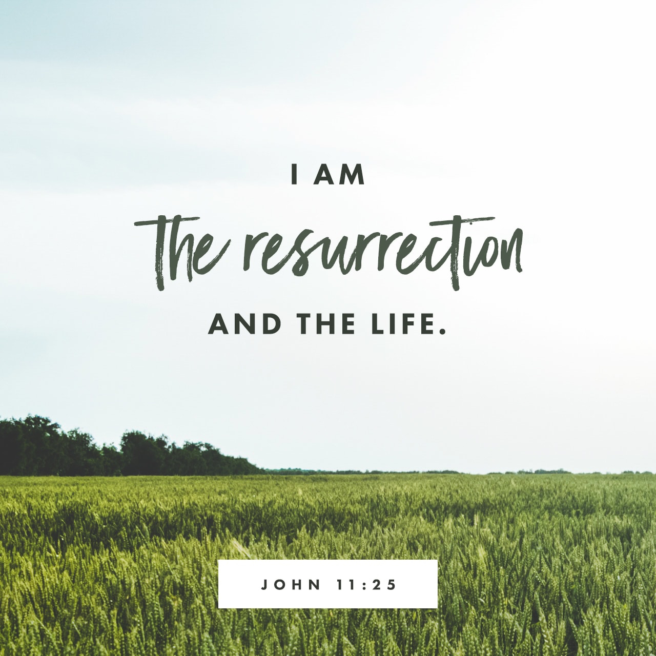 The Resurrection And The Life