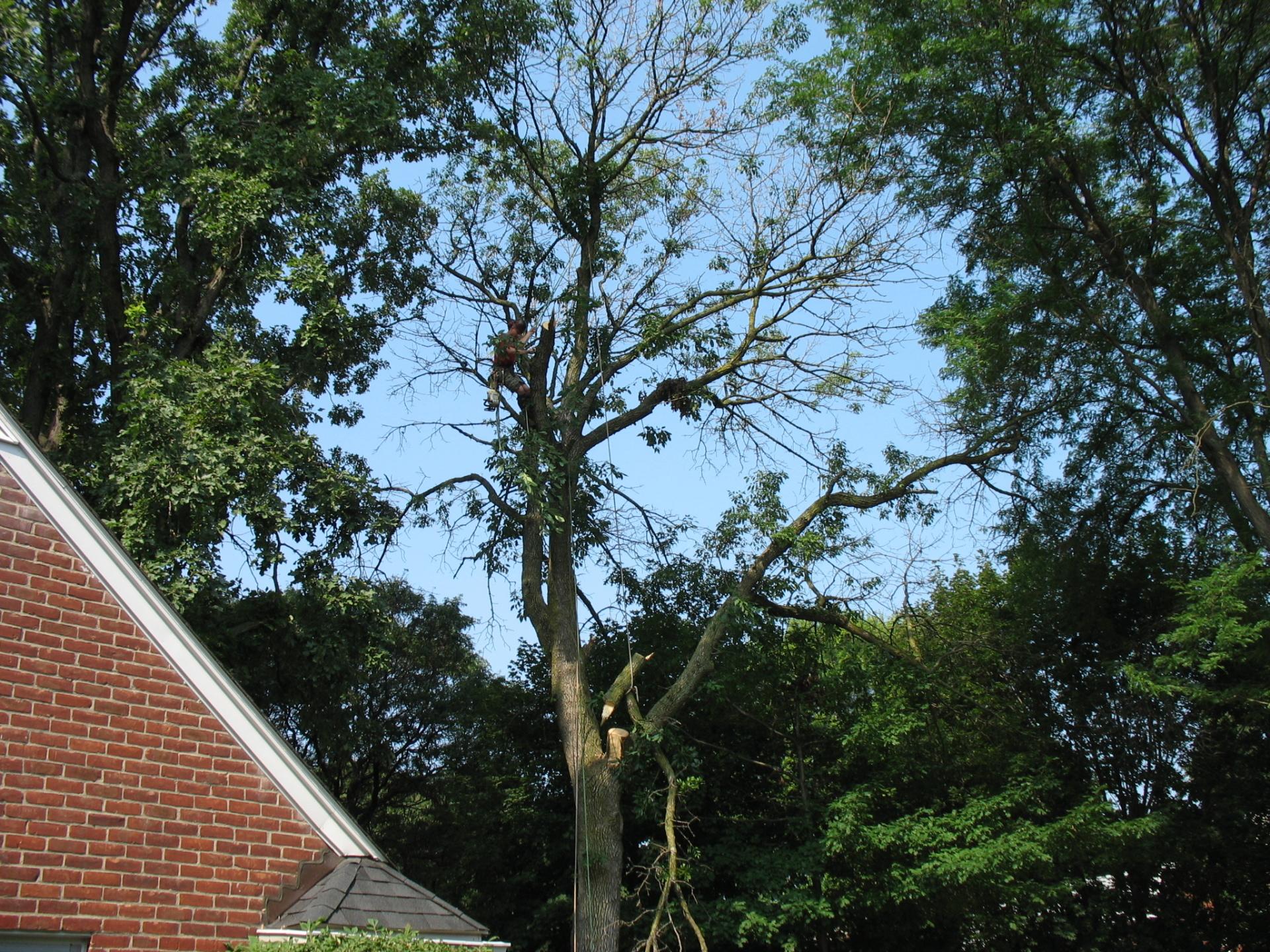 MAJOR TREE TRIMMING