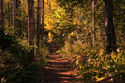 A path through the autumn wood. Photo by Captured Chaos Photography
