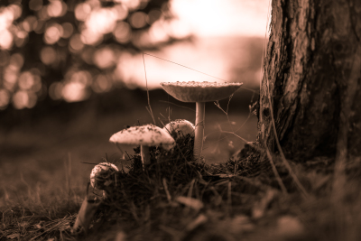 Mushrooms In The Forest, Courtesy of Captured Chaos Photography