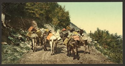 CO-140 Pack train on mountain road c.1898