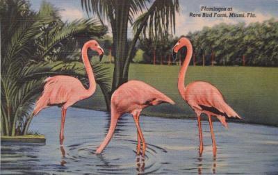 FL-102 Flamingos